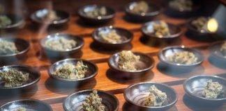 Oregon Marijuana Retailers Pass Decoy Test