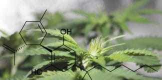Why Approval Of Cannabis-Based Epilepsy Drug May Not Be A Win