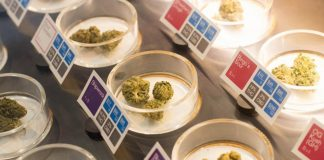 Differences In Marijuana Highs: Flowers, Edibles and Concentrates