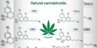How Marijuana's THCV Can Positively Impact Your Life