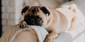 Dogs With Epilepsy: Can CBD Oil Help?
