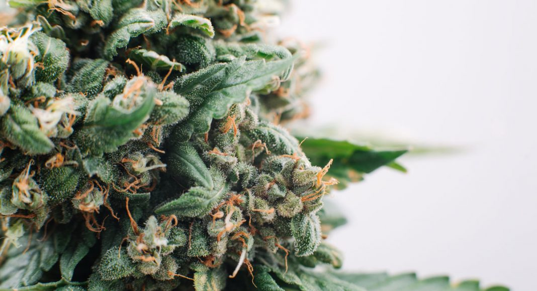 Make Cannabis Dispensary-Grade Products At Home With This Product