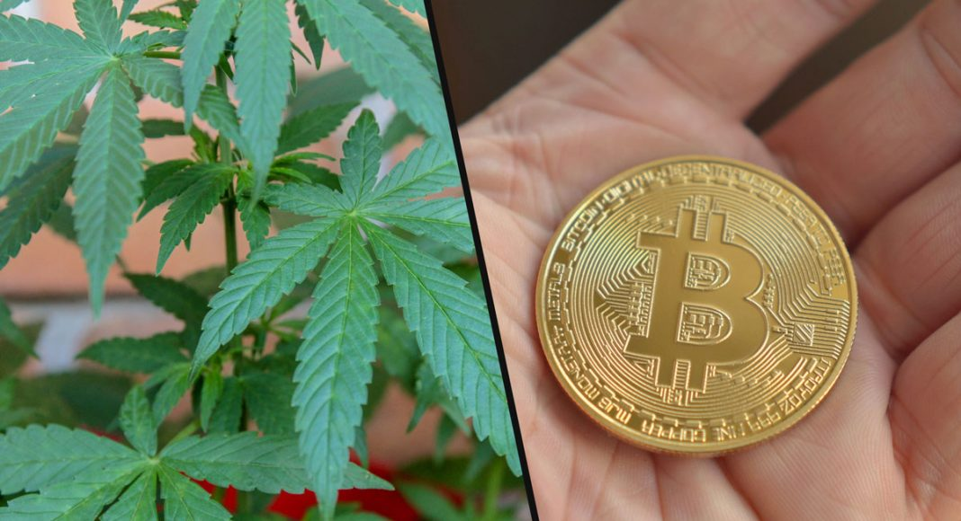 Is Legal Cannabis The New Bitcoin?