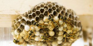 This Giant 3-Foot Wasp's Nest Will Make You Cry