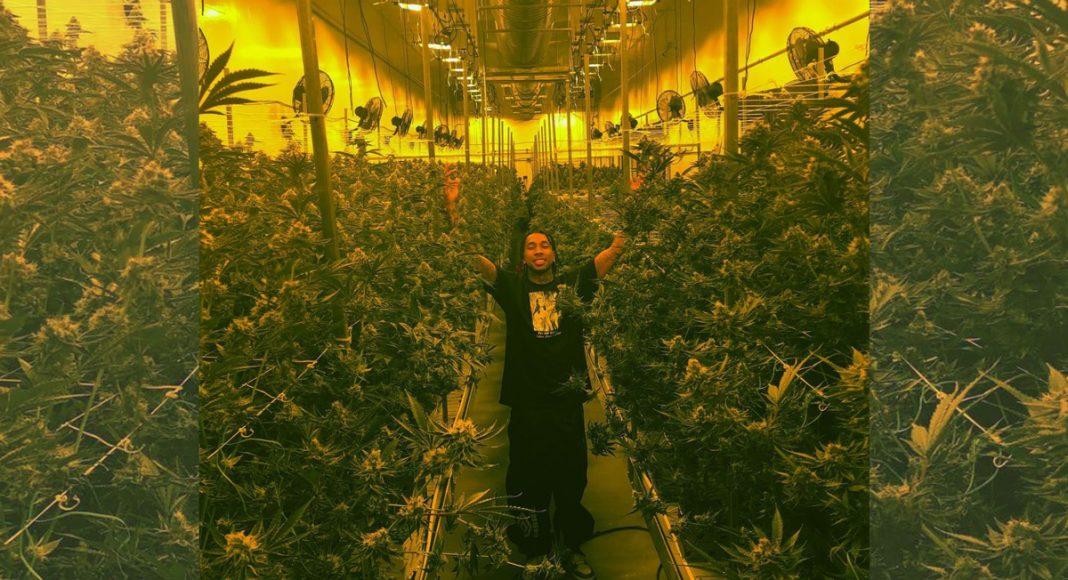 Rapper Tyga Teases New Weed Strain Tie-In For Hit Single 'Taste'