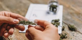 marijuana stronger than ever but doesn't mean what you think it does